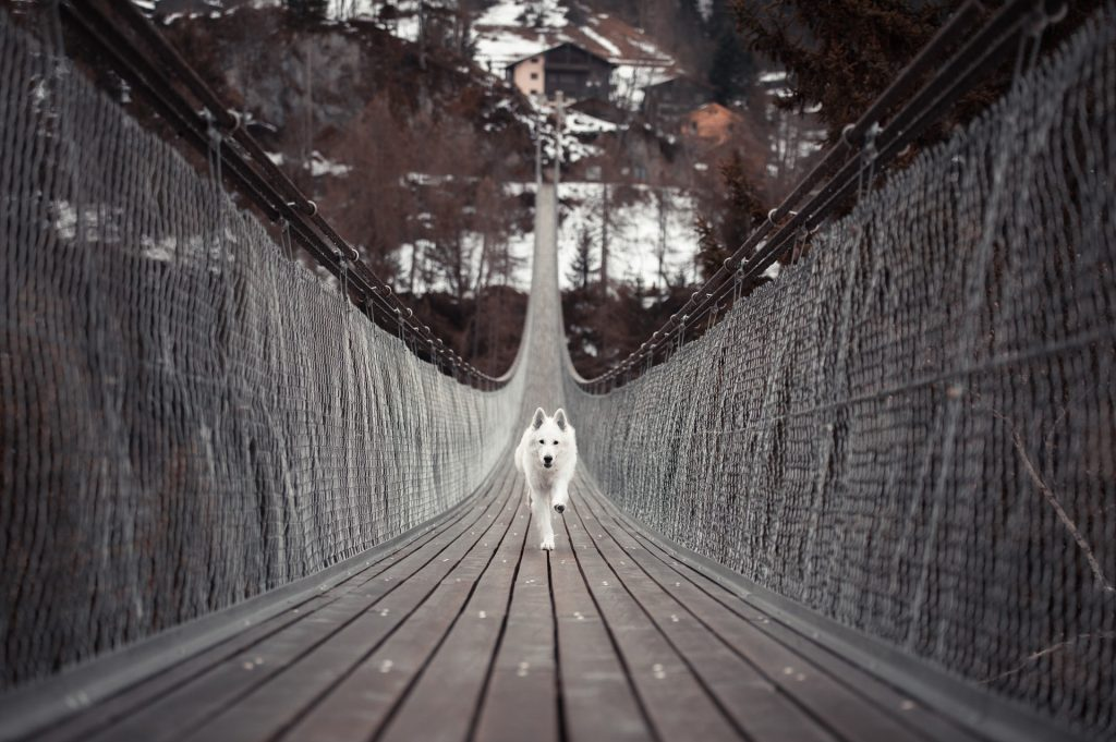 Image of a white dog running along a long suspended walkway towards the viewer. The suspended walkway forms a curved line that extends into the distance.